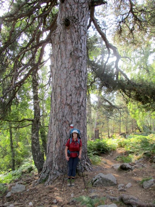 Огромные деревья не переставали восхищать Сашу. А я позировала, чтоб подчеркнуть в сравнении их размеры.