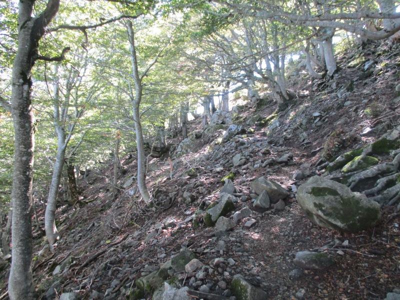 Подъём среди леса. Лес на высотах 1500+ совсем другой, нежели внизу.