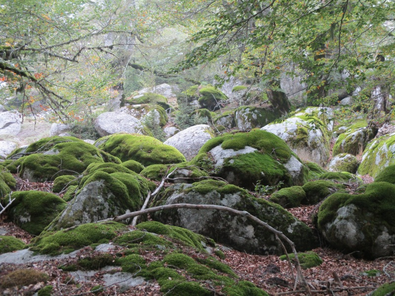 Валуны, поросшие мхом нереального ярко-зелёного цвета.