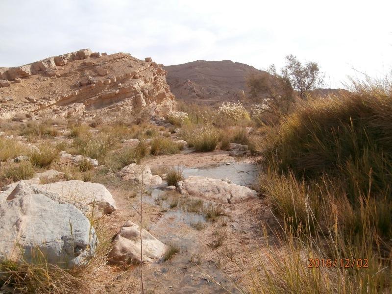 Эйн Саароним. Оазис в пустыне. Сейчас воды мало. Источник просыпается после шитфонот.